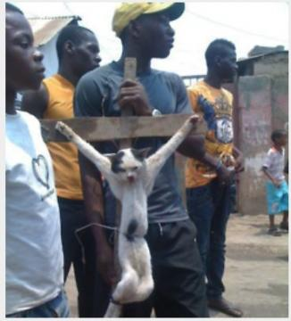 Nigeria: Vile Muslim savagery cruficies an innocent animal: Did this